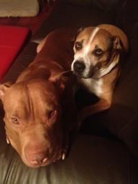 My two dogs, Keiko & Arwen